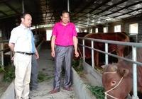 廣西水牛研究所赴三江縣開展產業幫扶指導工作