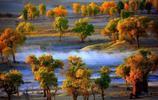 震撼人心的美,胡楊的千年傳說
