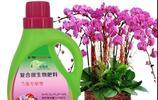 蘭花也愛喝酒吃藥,而且5片藥片扔下去,長得翠玉蔥綠,開花美仙