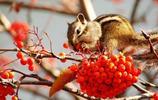 動物圖集:可愛小松鼠 超萌的松鼠