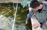 安徽懷遠80後大學生回農村創業養金魚致富 訓練金魚吃奶瓶絕活