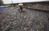 """實拍香港樓頂上的魚翅,""""沒有買賣就沒有殺害"""""""