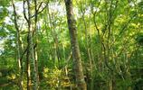 五指山熱帶雨林的另一面
