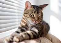 養狸花貓的你,關於狸花貓這八點知識你需要知道