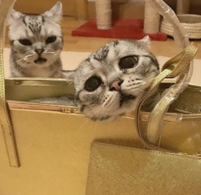 世上最憂鬱的貓?其實人家這種神情是有原因的,鏟屎官思想有深度