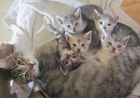 家裡的母貓剛生完孩子,主人卻愁眉苦臉,網友:這奶貓的父親好亂