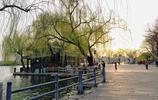 圖蟲風光攝影:湖畔垂柳