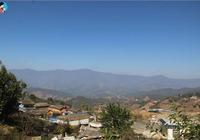 雲南這座茶山的藤條茶樹堪稱天下一絕,其茶樹形態之美令人稱奇