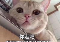 有個撩人的男友是種怎樣的體驗?網友:這狗糧有毒,吃了還想再吃!