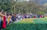 """杭州太子灣公園""""爆""""了,9萬多人賞花,遊客吐槽堵了三小時"""