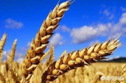 """有些人說""""現在什麼都漲價,只有糧食不漲價"""",你贊同該說法嗎?你覺得糧食該漲價嗎?"""