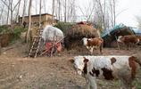 淮河上即將消失的最後一個老莊臺,原始面貌可見昔日農民生活狀態