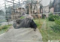 唐山有動物園嗎,怎麼樣?