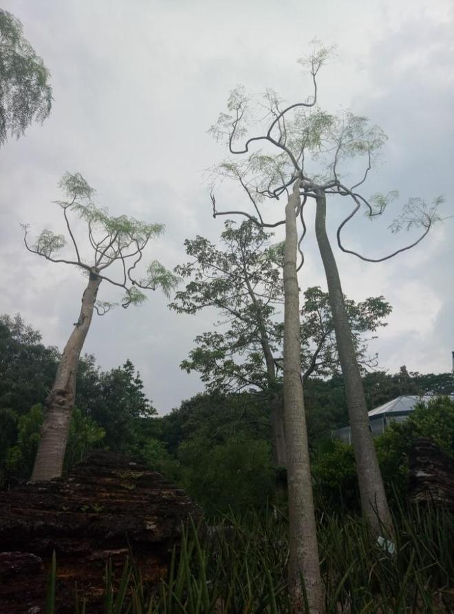 2017國慶中秋節遊覽廣州華南植物園溫室群景區