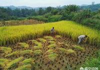 國家真的會收回農村土地嗎?