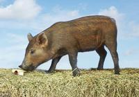 王小波:一隻特立獨行的豬