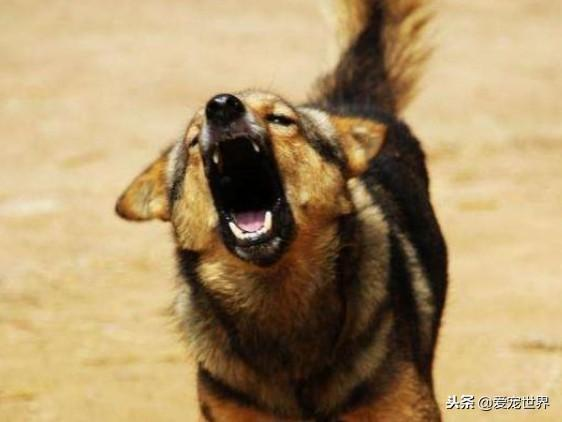 狗狗的五個動作,你懂它的意思嗎?