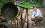 安徽六旬癌症老人收養流浪狗,為戰勝癌症在自家屋頂插紅旗