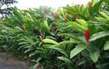 風景圖集:美國哥斯達黎加熱帶雨林風景