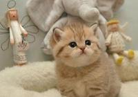 貓經常為了娛樂而虐殺其他動物,卻為什麼依然被很多人寵愛?