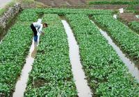 新時期農業經營方式的再小農化