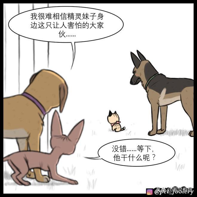 萌翻了:小奶貓與退役軍犬之《這隻大狗不太冷》,第12集