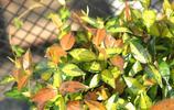 平時山上若遇到這8種植物,千萬多挖幾株養回家,淨化空氣又防蚊