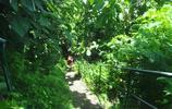 走進巴厘島,領略熱帶雨林風光