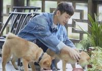 《嚮往3》官宣好消息,4只狗都被大咖領養,簡直是狗生贏家