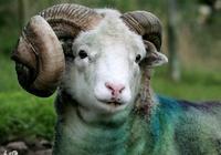 菩薩說:屬羊人請注意,進入10月份,這幾個地方儘量少去,別不聽