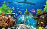 攝影圖集:太平洋海底世界