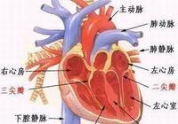 如何減少心血管病對壽命的影響?