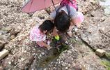 青島:旅遊旺季棧橋趕海遊火爆,免費趕海引遊人,螃蟹蛤蜊等小海鮮任你撿