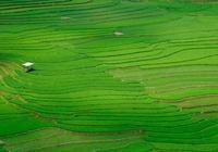 稻田+民宿+餐廳,驚豔到骨子裡的田野風光