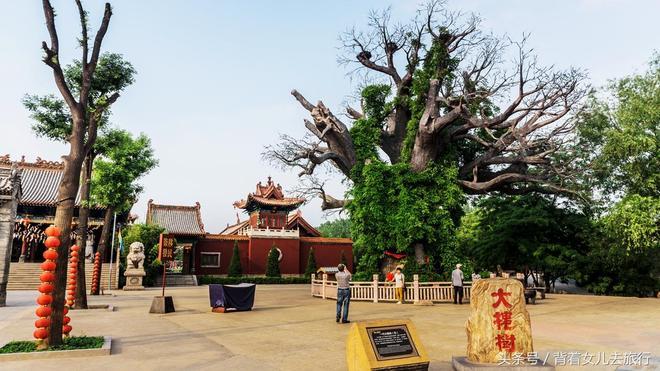 400歲的山西大槐樹,曾是無數人的老家,每年數萬人祭拜