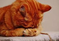 感染貓癬不是我矯情,我也很無奈啊啊啊啊