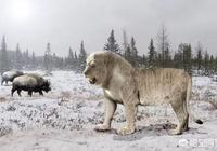 洞獅和劍齒虎誰更強?