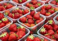 現在草莓正好吃,掌握這3點,就能選到好草莓,老闆看到也服氣