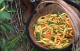 河南留守老人每天凌晨4點摘辣椒 午飯就一個饃,每天只掙30元!