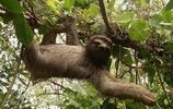 動物圖集:樹懶