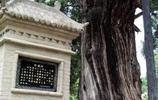 實拍中國最古老的十棵大樹,第二棵見證了華夏之路