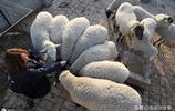 """42歲農村女子養羊致富,""""誰說女子不如男,我帶領鄉親一塊富"""""""