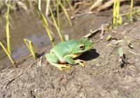 5種在中國發現不久的新物種,第3種被叫賣每隻一百萬,稀罕了