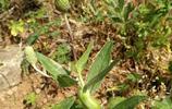 那是一棵什麼樣的野草,即使受了傷,長了瘤,還要拼全力開出花!