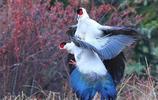 在天願作比翼鳥,攝影大師鏡頭下的雙鳥集,配上古詩詞你喜歡哪幅