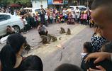 尷尬的街頭耍猴人每天要讓猴子打上百耳光,只是為了討好觀眾