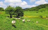攝影圖集:享有小天山之美譽的關山草原