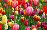 養花怎樣安全使用農藥?花卉農藥安全使用方法