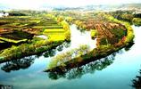"""中國最美的春天,漫山遍野,""""黃""""裡透""""白"""",遊客:中國的驕傲"""
