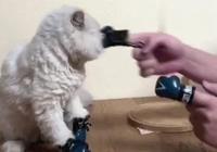 貓咪陪主人練拳擊被打了一拳,扭頭看見同伴上去就一拳